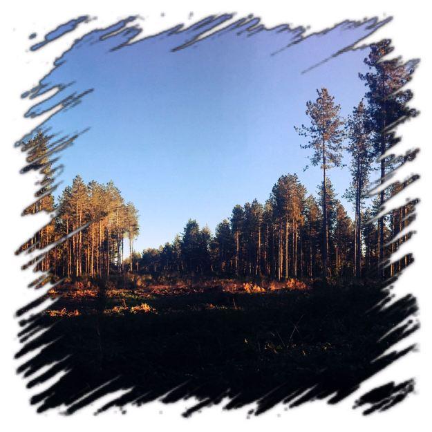 foresta3